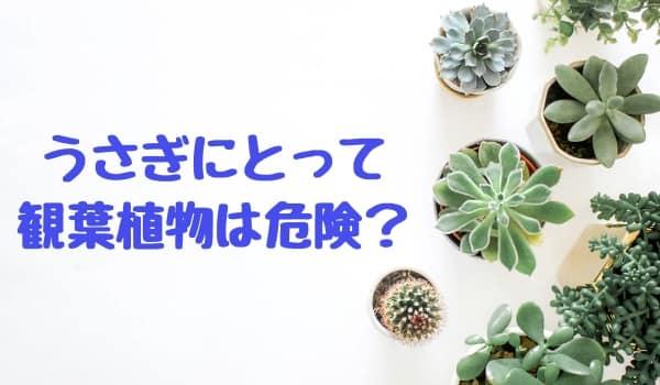 観葉植物に注意